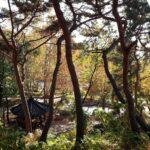 韓国の秋、朝の贅沢な過ごし方。読書と紅葉と日向ぼっこ。