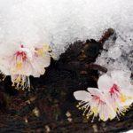 海外生活克服のポイント。それは気候への適応。【ケース:韓国】の春は3寒4温。